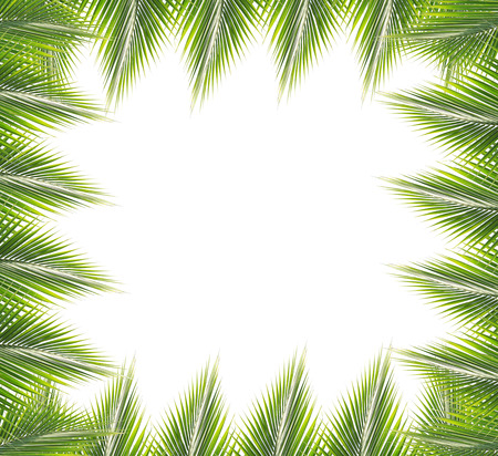 Green coconut leaves frame isolated on white background photo