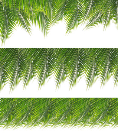 Collection of green coconut leaves border isolated on white background photo