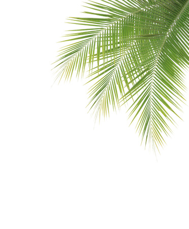 Green coconut leaf frame isolated on white background photo