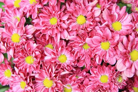impatiens: Flower background