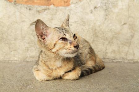 Portrait of dirty kitten on street photo