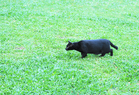 catling: Black cat on green grass field Stock Photo