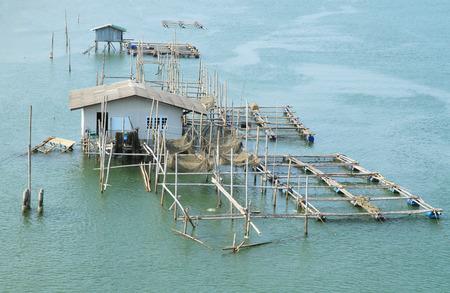 fish rearing: Cage aquaculture farm