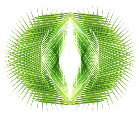 formulation: Abstract coconut leaves background