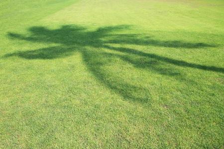 tree shadow: Coconut tree shadow on green grass field