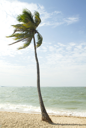 Tropical beach and coconut tree Stock Photo