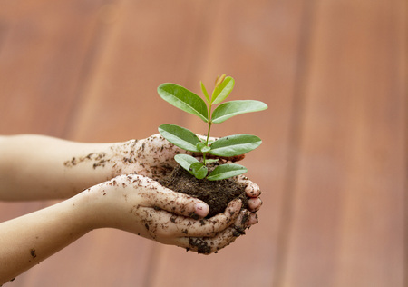 Children`s hands holding young plant with wooden floor background. Ecology concept