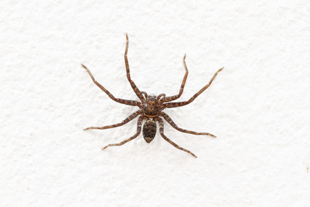 Close up image of spider on rough white wall