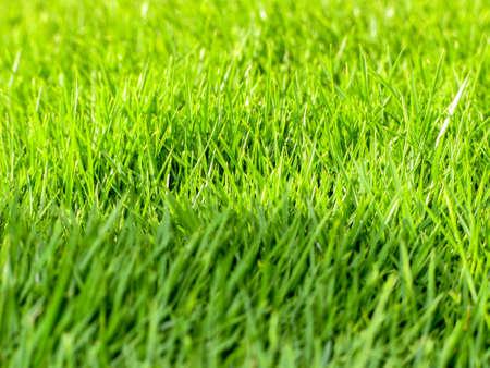cut grass: Green Turf