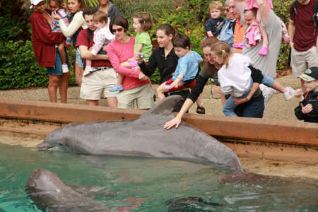 violating: ORLANDO, FLORIDA - MARCH 14: People touching dolphins by their hands in Orlando SeaWorld on March 14, 2008. Four years later PETA compains for SeaWorld allegedly violating rights of its habitants Editorial