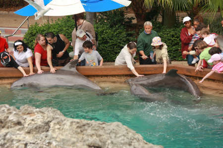 violating: ORLANDO, FLORIDA – MARCH 14: People touching dolphins by their hands in Orlando SeaWorld on March 14, 2008. Four years later PETA complains for SeaWorld allegedly violating rights of its inhabitants