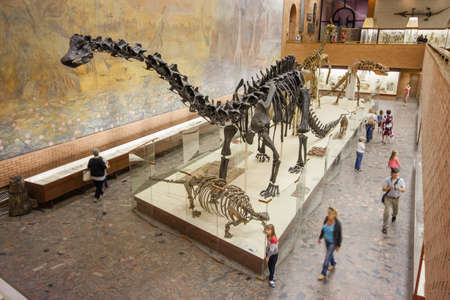 MOSCOW, RUSSIA - JULY 31, 2013: Visitors to the Palentology Museum look at dinosaur skeletons in Moscow, Russia on July 31, 2013.