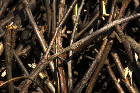 Pile of wooden branches photo
