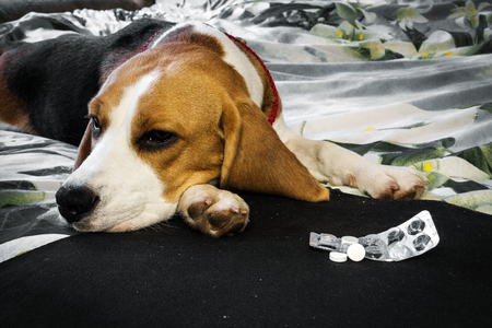 薬と病気の犬