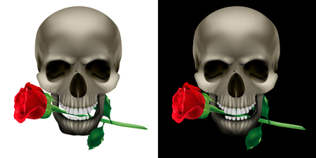 Skull with a rose in the teeth