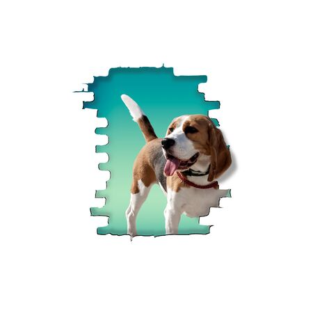 The dog breed beagle peeps