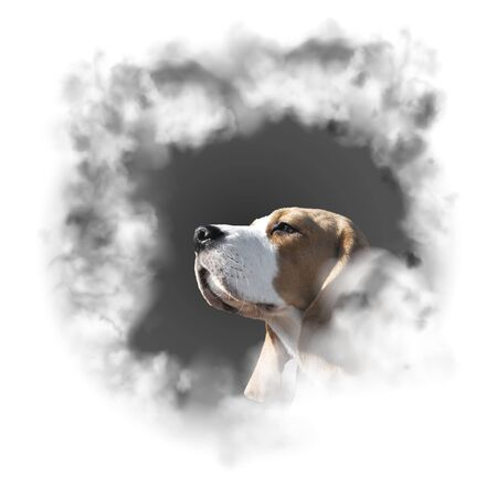 Portrait dog breed beagle Фото со стока