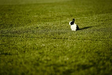 Rabbit on the lawn  Reklamní fotografie