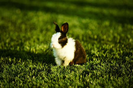 close up to a rabbit on the lawn