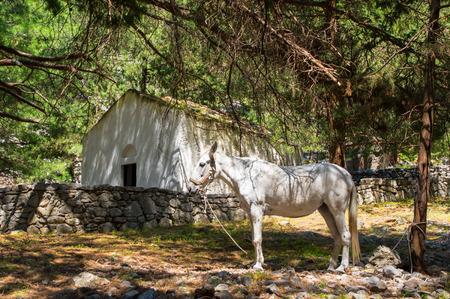 White horse hiding from heat in Samaria Gorge on Crete Stock Photo