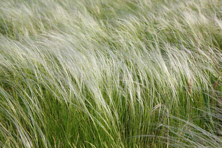 Feather-grass in a steppe photo