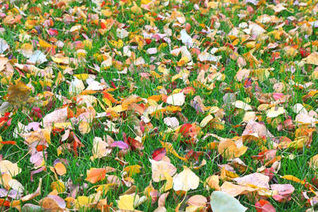 grass close up: Fallen leaves on green grass close up Stock Photo