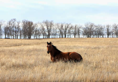 Horse lying on the grass in the autumn steppe