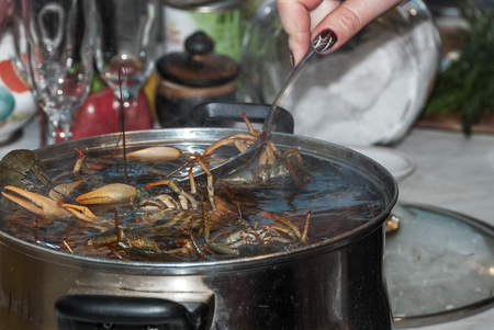 A womans hand is stirred with a spoon freshly placed in a pot of boiling water fresh river green crayfish Stock Photo