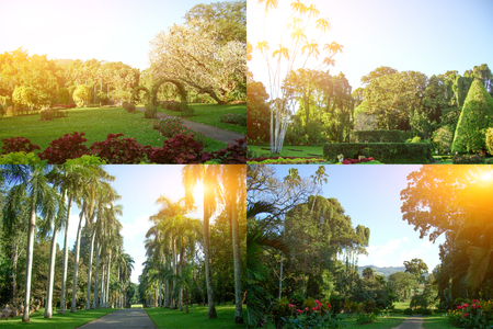 Royal Botanical Garden with landscape design in Sri Lanka. A collage of four photos