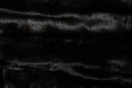 Texture of natural black shiny fur
