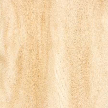 Texture of natural beige shiny fur