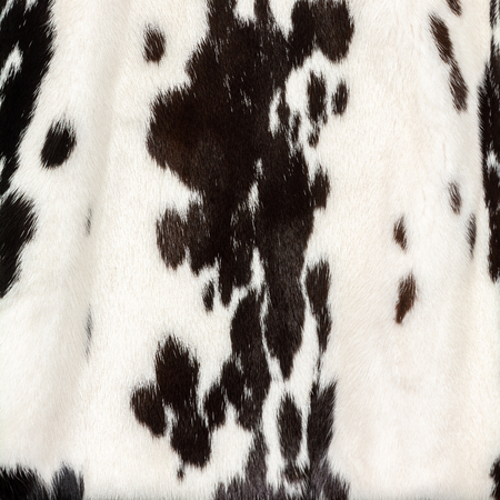 Texture of natural white fur with black spots like a cow