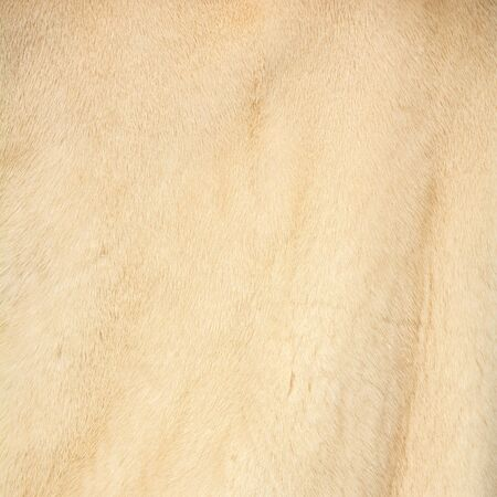 Texture of natural light gentle beige fur