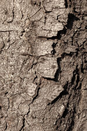 Texture of old wood with cracks closeup