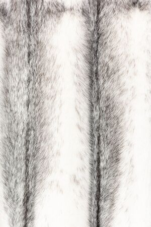 Texture of natural black and white fur with beautiful folds in waves
