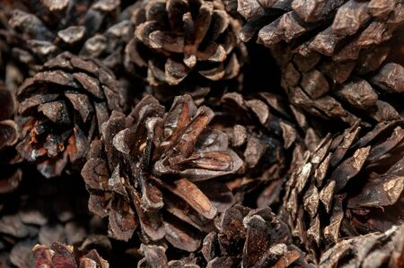 Pine cones lie a lot with a beautiful texture or background