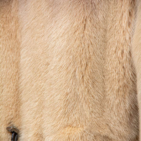 Light fur on a fur coat with a shallow depth of field and blur. Shiny, expensive pattern with textured hairs. Texture for designers Standard-Bild