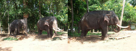 Elephant park or sanctuary in Asia. Collage of two photos to advertise travel, vacation or tourist trip Standard-Bild