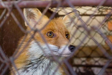 cruelty: Issues of cruelty to animals