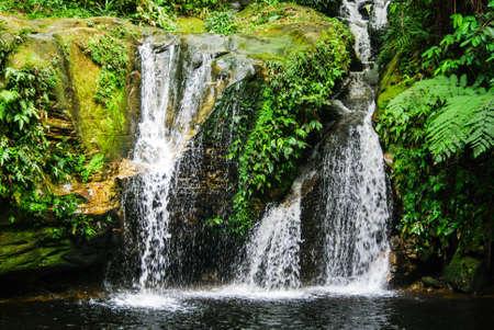 interior of the Amazon Rainforest, Madre de Dios River in Peru.