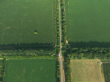 Aerial top down green field with crossing road. Alone tree. Top view of pattern fields. Ukraine, Europe
