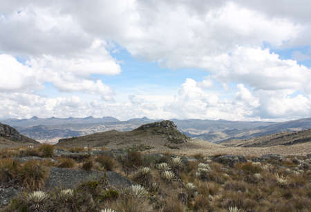 Sumapaz Paramo's Landscape near Bogota. Colombia, with endemic plant