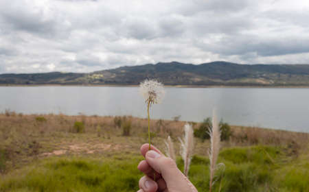 A young male hand holding a wild flower with lake environment scene blue mountains and white cloudy sky
