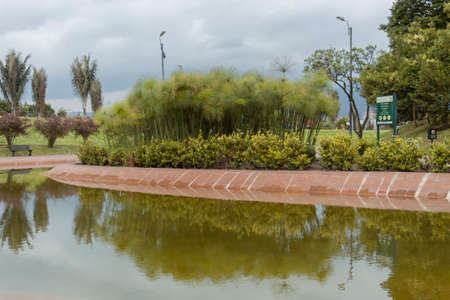 BOGOTA, COLOMBIA - A Virgilio Barco public library park with small lake reflections an endemic andean vegetation at sunny day.