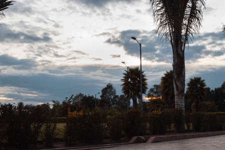A dusk colombian park scene with cloudy colorful sky and native vegetation. Wheater and Green concept