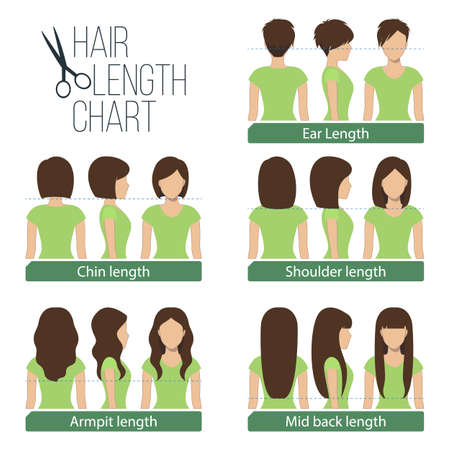 long hair: Set of different hair length for haircuts and hairstyles - short, medium and long length. Vector.