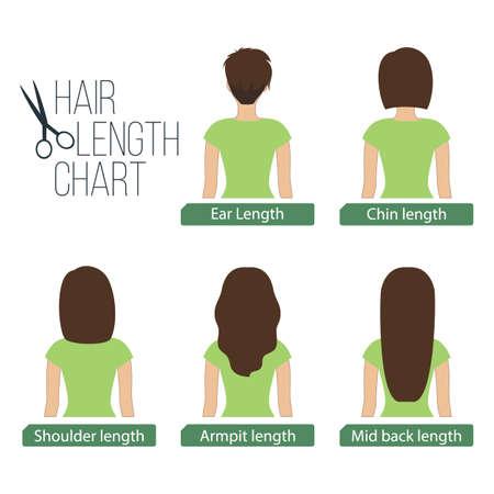 Largo del cabello diagrama vista atrás, de 5 longitudes de pelo diferentes. Ilustración de vector