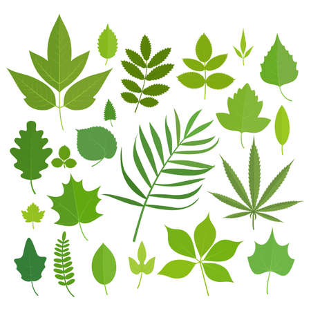 poplar: Set of leaves icons isolated on white background.