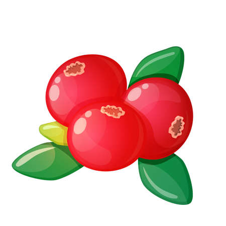 Colorful cartoon illustration of cranberry on a white background. Vector.