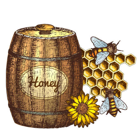 Hand drawn ink sketch illustration of honey, organic nature product. Vector